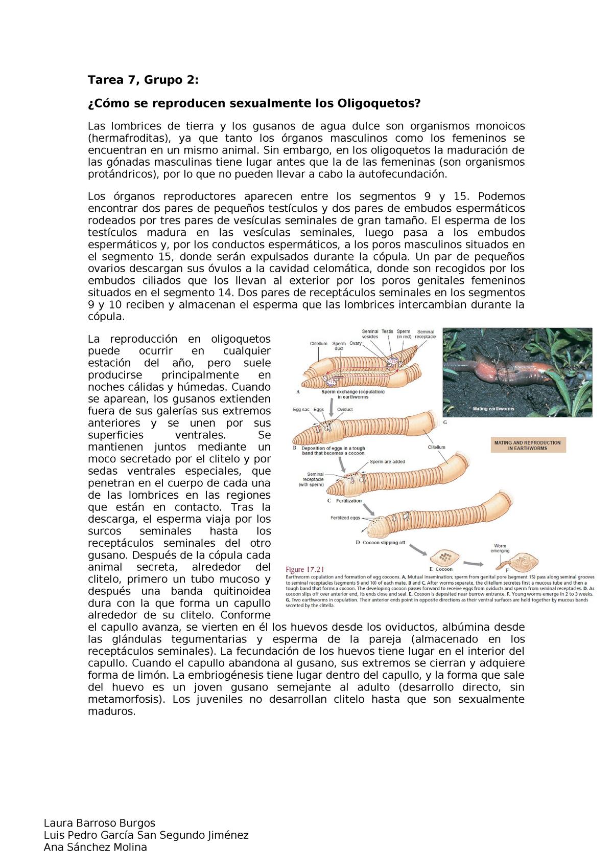 lábszemölcs eltávolítás helyreállítási ideje papilloma kenőcsök a testen