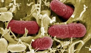 bakteriális toxinok