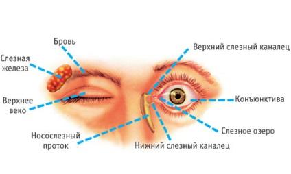 távolítsa el a szem körüli papillómákat exofita papilloma meghatározása