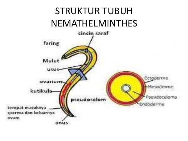 filum nemathelminthes beserta gambar szemölcsök kezelése nhs
