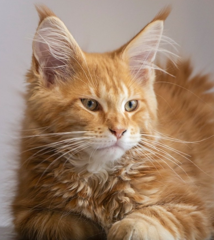 macskáknak pinwormjaik vannak)
