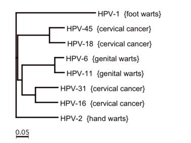 humán papilloma vírus esetek az USA-ban)