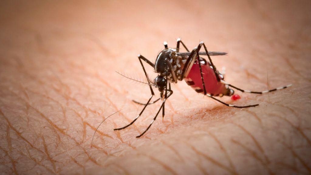 Vízben élő bőr paraziták, Gyógyítás mindenféle parazitára