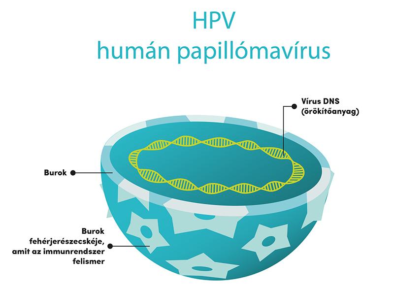 papilloma vírus és csók