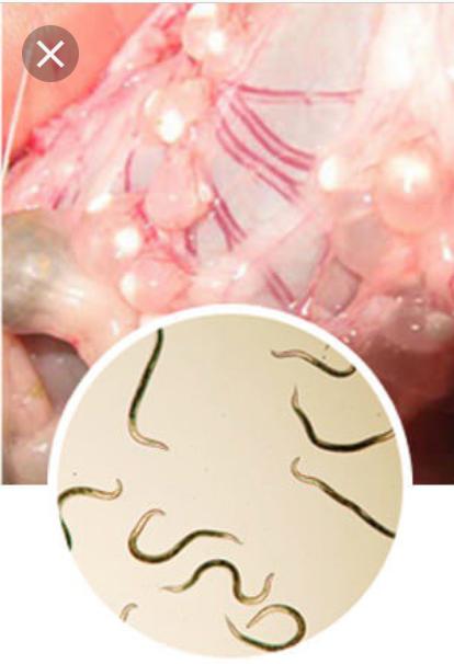 papilloma hidung adalah)
