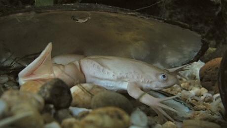 békák az akvárium falán)