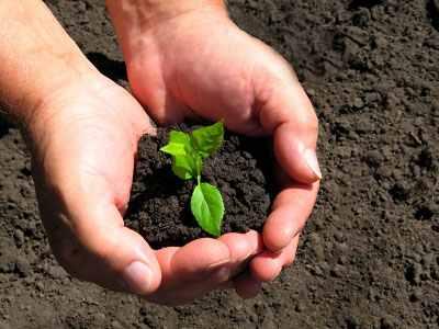 A tárolási és kései káposztafélék ültetése - Agro Napló - A mezőgazdasági hírportál