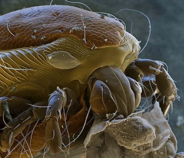 egy féreg mikroszkóp alatt