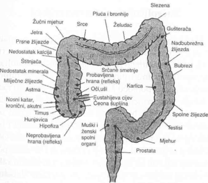 kako otkriti paraziták és crijevima hogyan lehet kihozni a férgeket egy labradorból