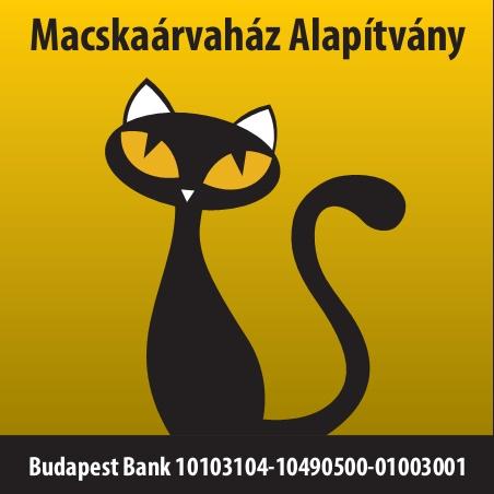 macskakert terápia)