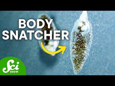 Milyen termékek választják el a parazitákat - BacteFort - Innovatív formula paraziták ellen!