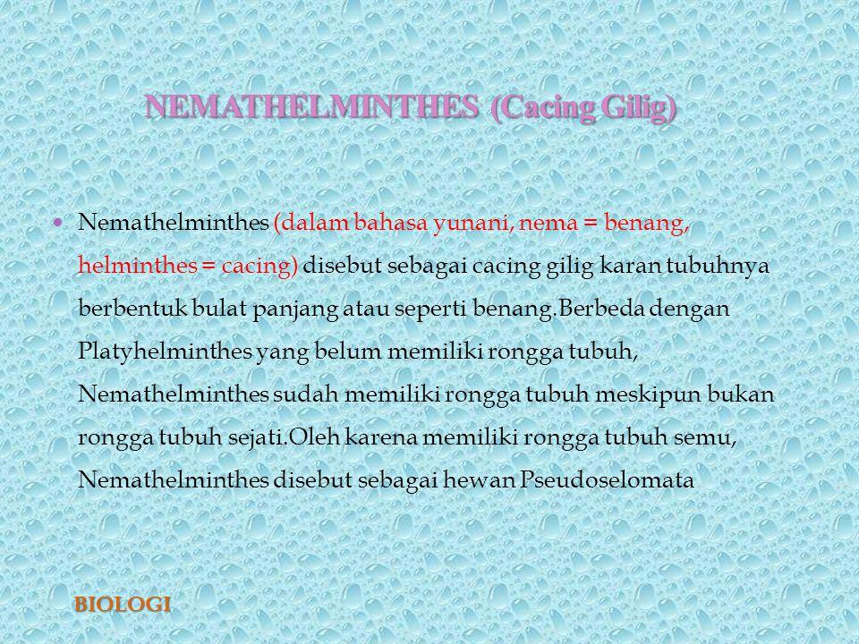 nemathelminthes filum peranan dalam kehidupan)