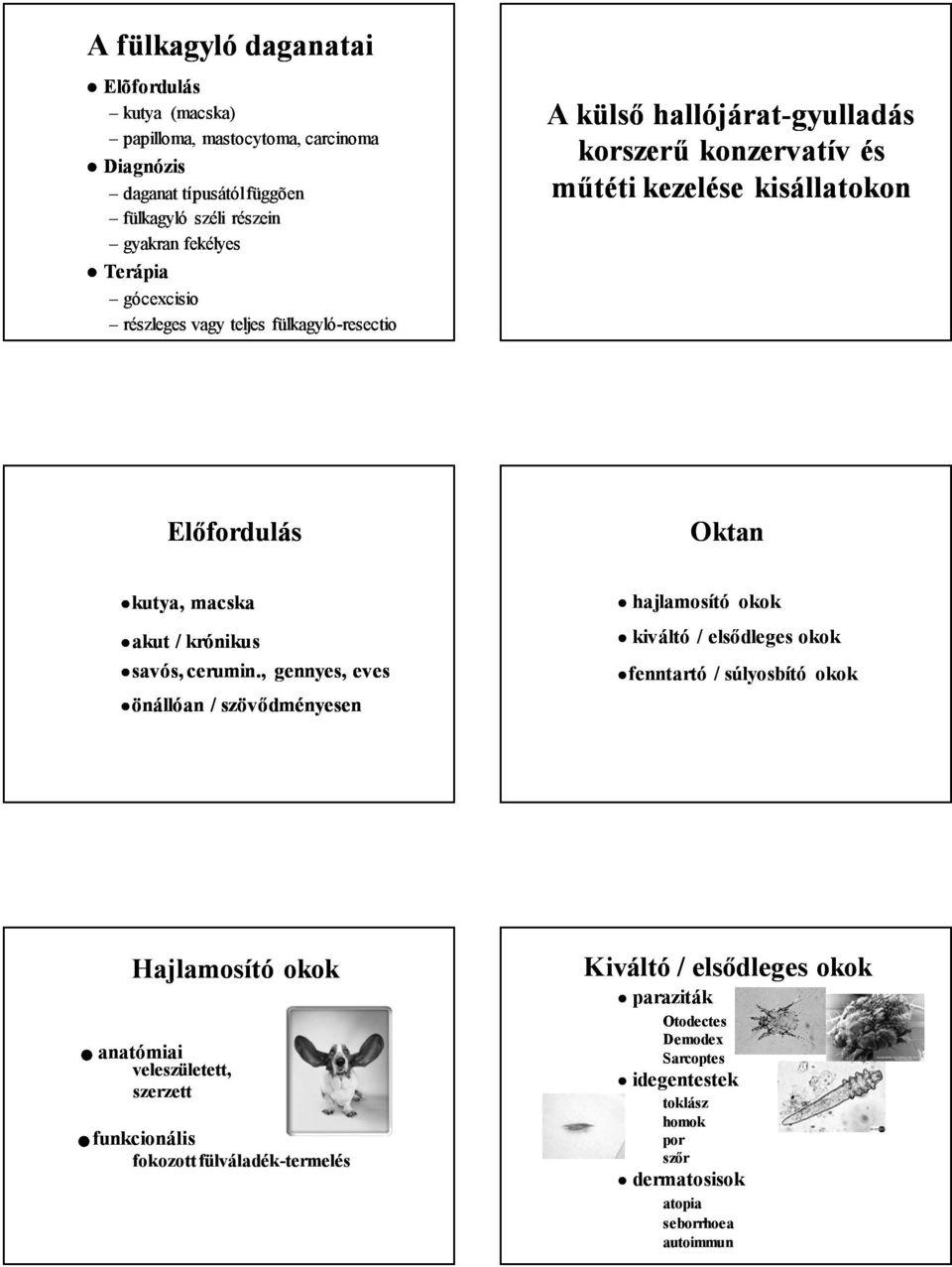 papillómák és paraziták)