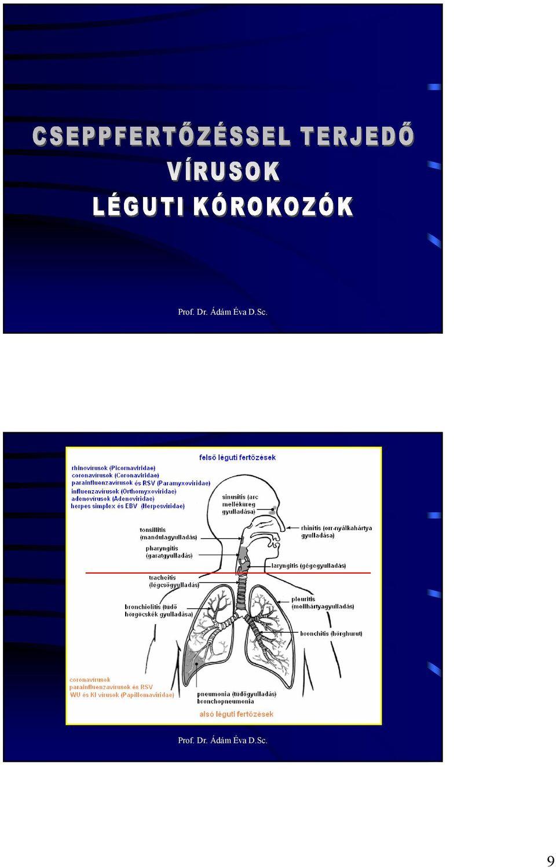 papillomaviridae kórtörténet)