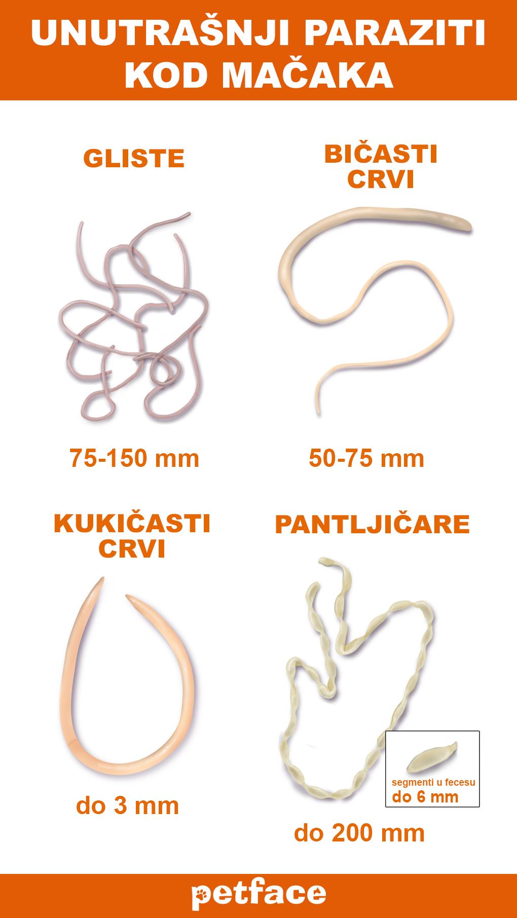 """Endo parazita helminták. 4 Replies to """"Izrael paraziták elleni homeopátiás gyógyszerek"""""""