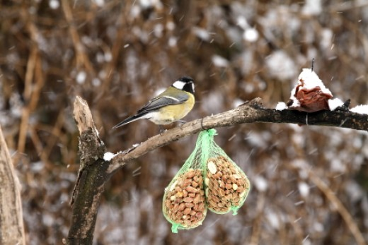 parazitaellenes szer madarak számára)