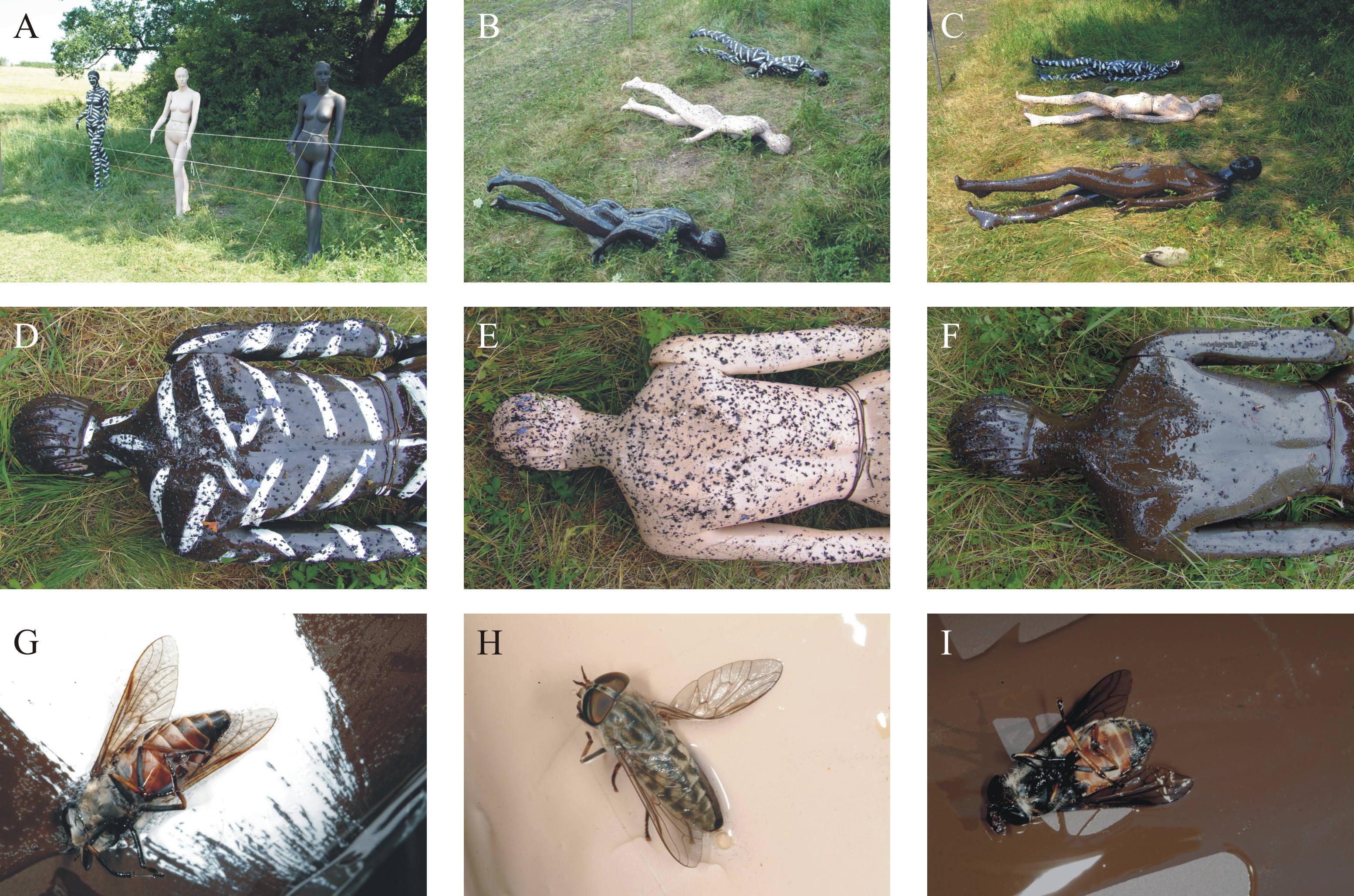 paraziták a társadalmi rovarokban)