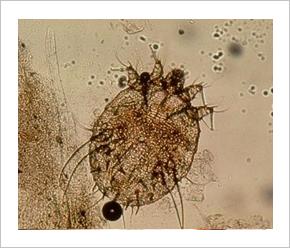 paraziták kezelése a láncban