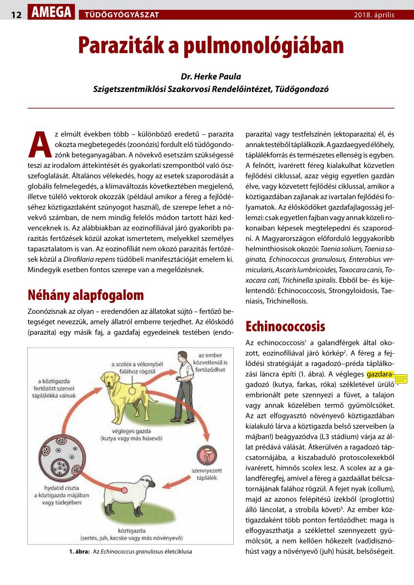 a helmint ascites fejlődési ciklusa