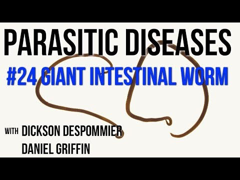 a parazita pinwormák életciklusa