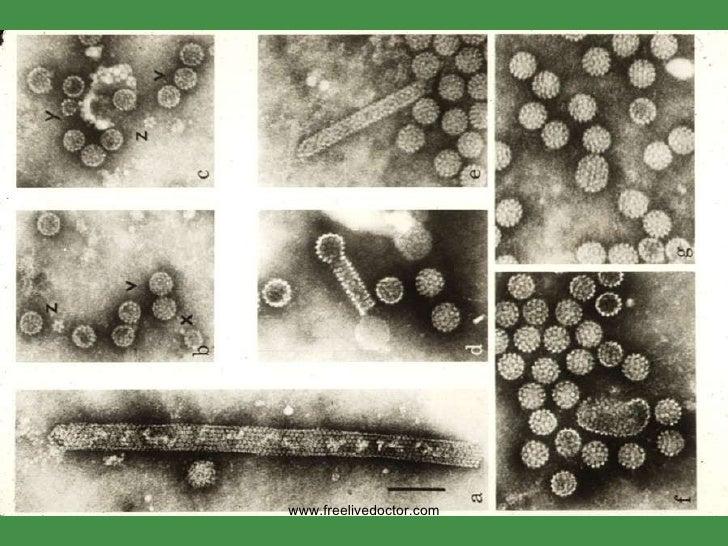 papillomavírus facebook)
