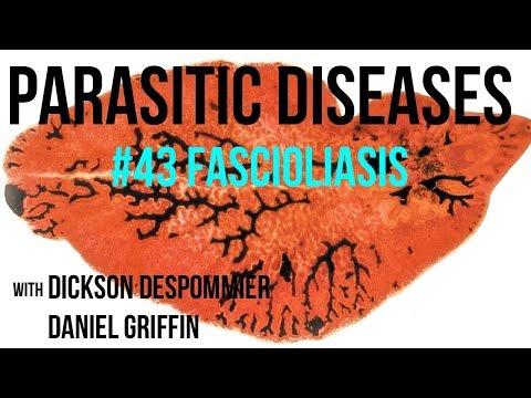 fascioliasis kezelése