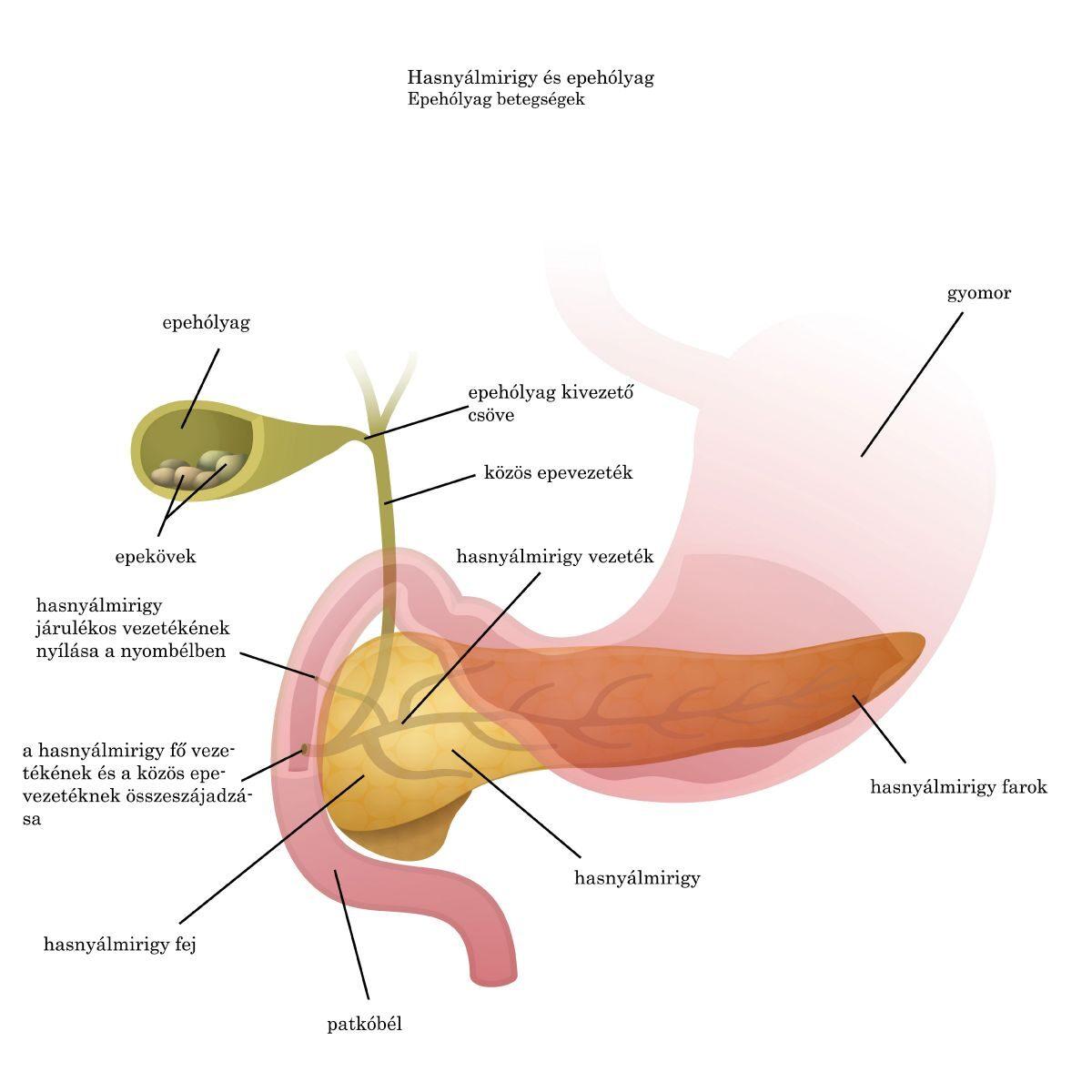 a szubkután paraziták tünetei és kezelése