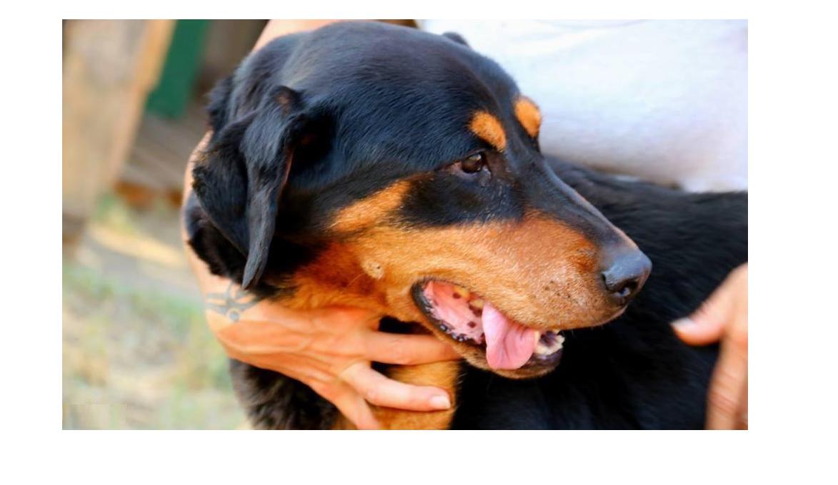 A húgykövesség tünetei és kezelése kutyáknál - HáziPatika