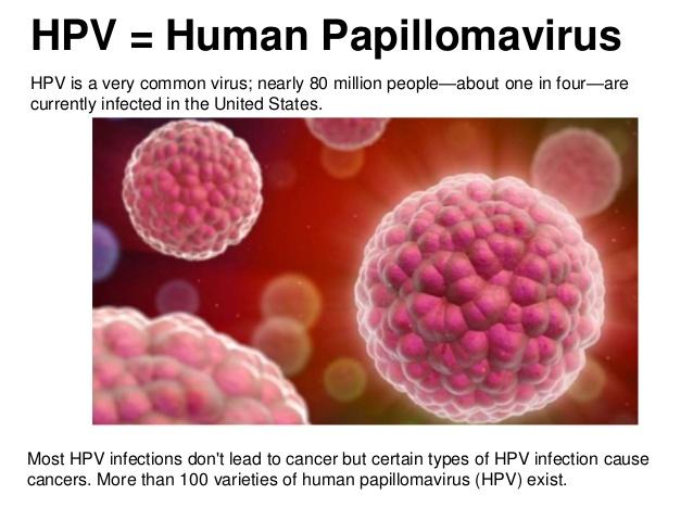 Humán papillomavírus – Wikipédia