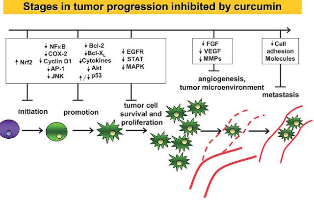 szemölcs vírus rák magas kockázatú hpv rákot okozhat