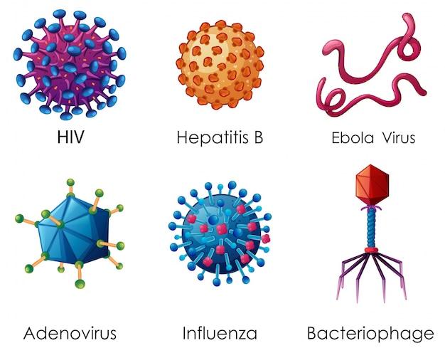 vírus vírus)