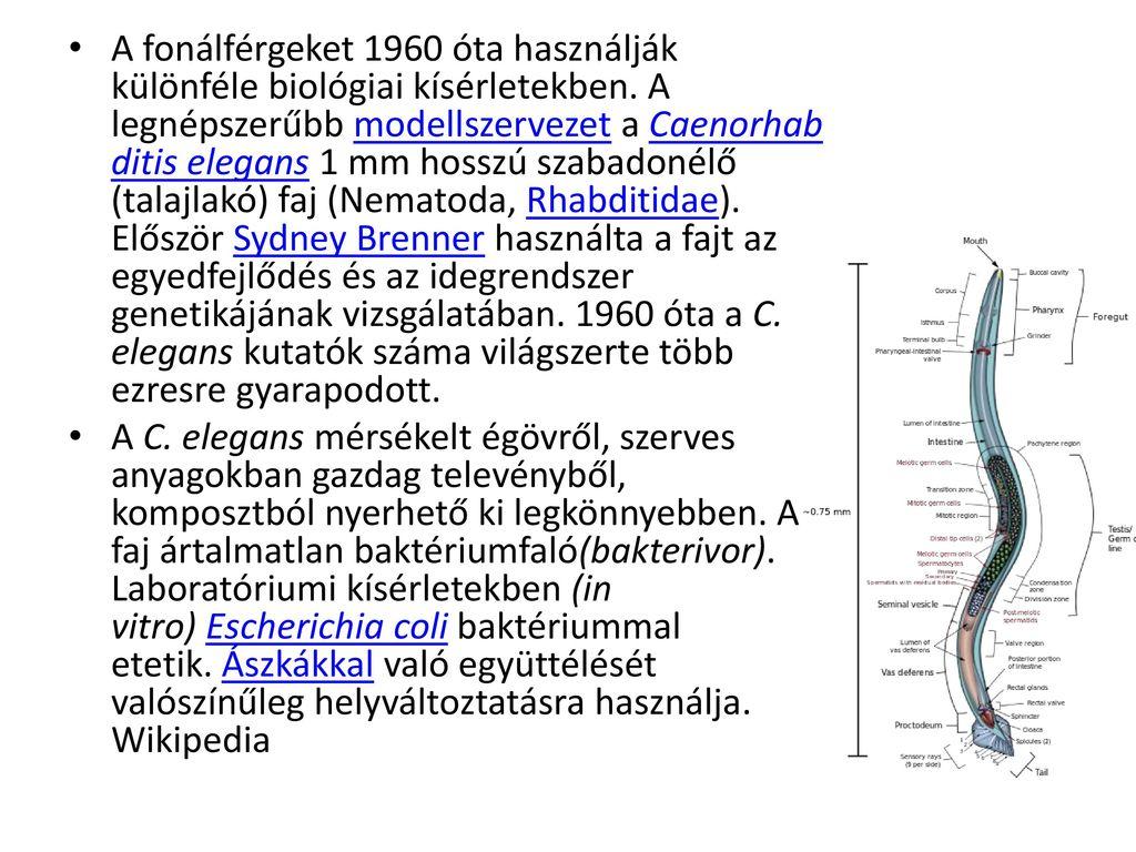 összefoglaló a platyhelmintekről és a fonálférgekről)