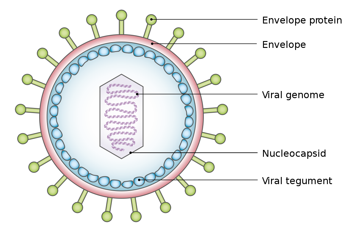 Fültőmirigy, nyálmirigy daganatok tünetei, kivizsgálása