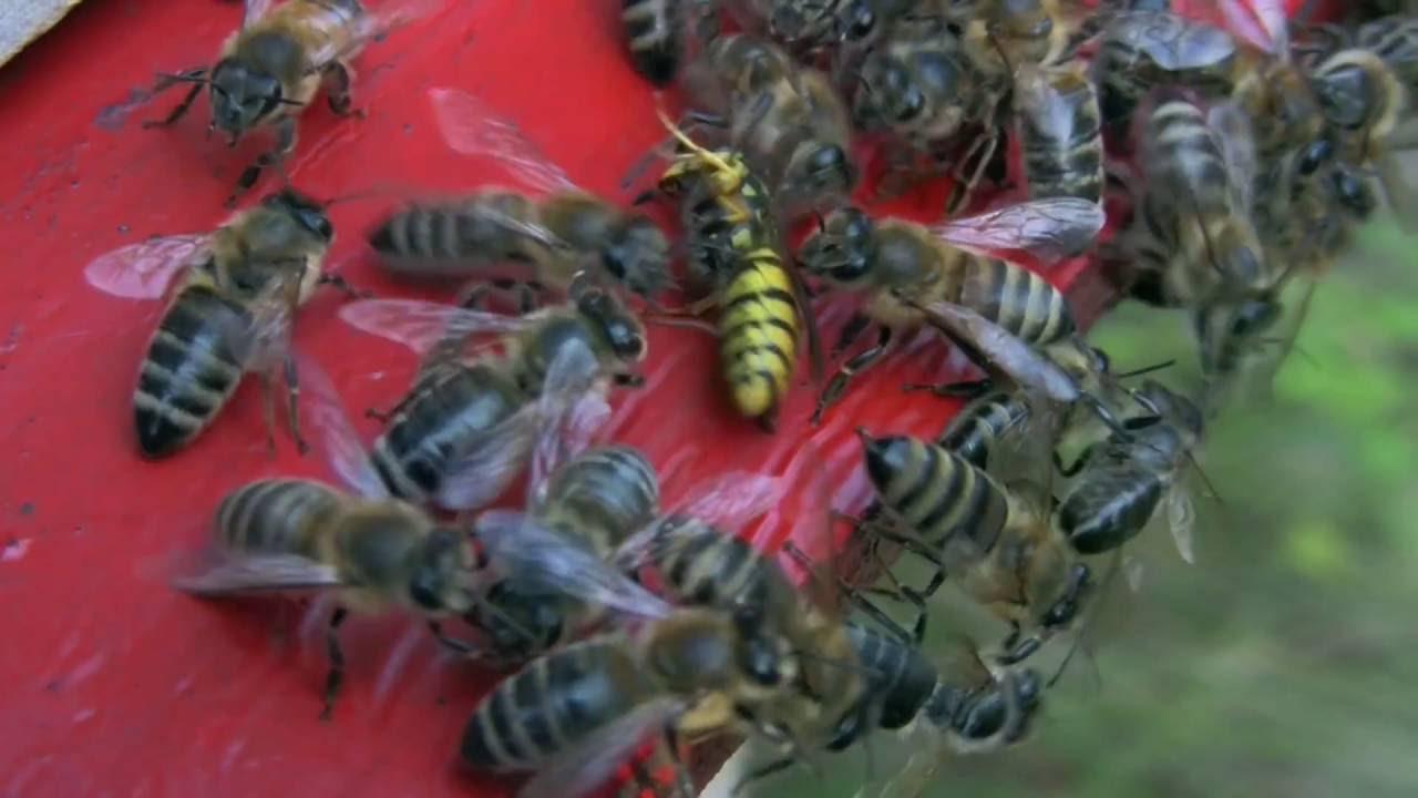 papilloma a méh tüneteiben