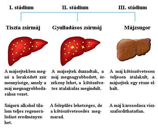 májrák daganat)