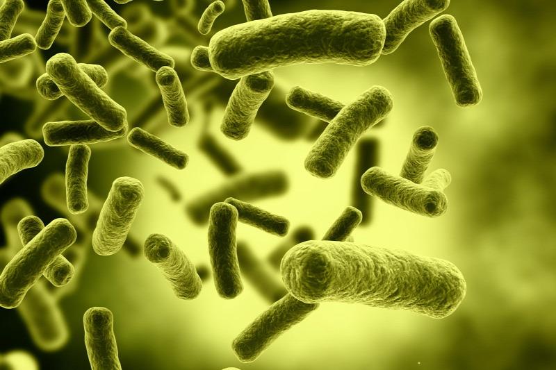 baktériumok meghatározása)