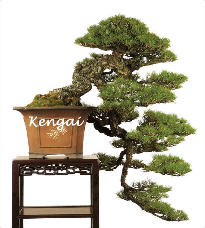 bonsai paraziták)