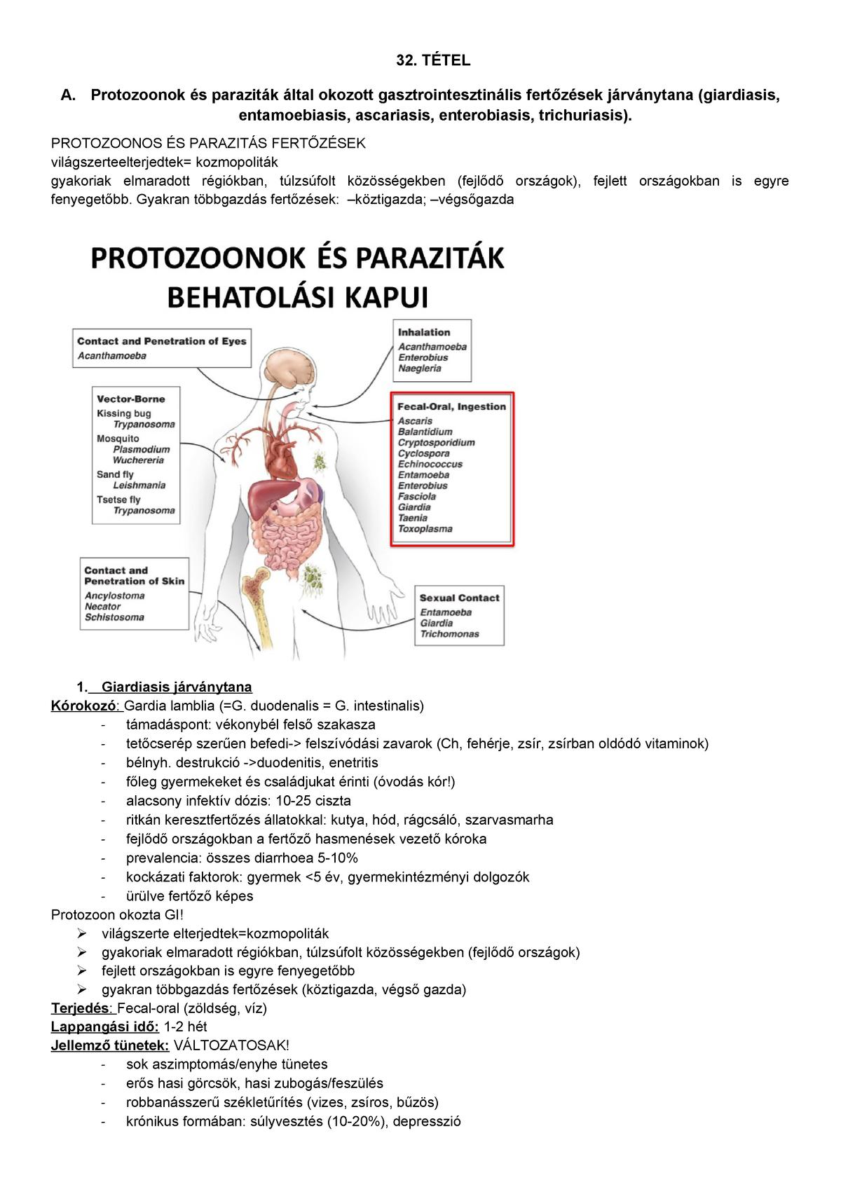 duodenális ancylostoma)