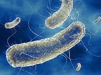 enterobiosis szűrése az óvodásoknál végbélrák története