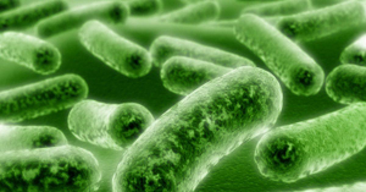 hasznos és káros baktériumok)