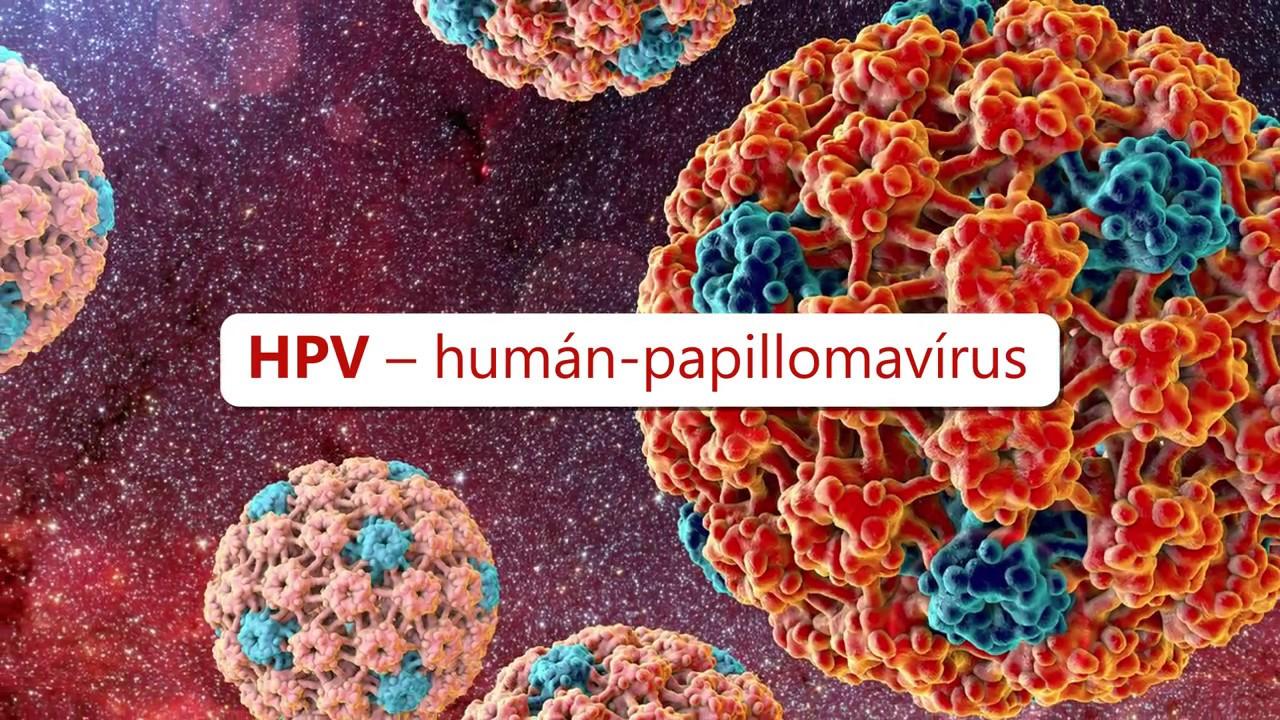 hpv vírus játék